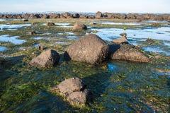 Williams stadstrand en av den berömda stranden i förort av Melbourne, Australien Arkivbilder