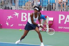 Williams Venus 5-times Wimbledon winner Stock Photos