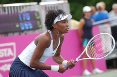 Williams Venus - champion grand (9) Photo stock