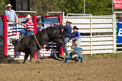 Willits Frontier Days Rodeo Stock Photography