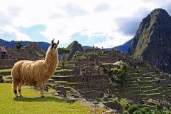 Willkommen zu Machu Picchu Stockbilder