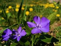 Willkommener Frühling Stockbild