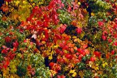 Willkommener Herbst Lizenzfreie Stockfotos