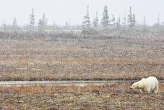 Willkommener Schnee, willkommene Lebensdauer Stockbilder