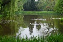 willon的反射在湖 免版税图库摄影