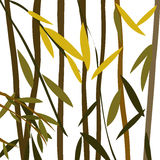Willow. Leaves over a white background Stock Photos
