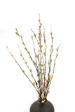 Willow. Plant, branches, kidney, vase, holiday, spring Royalty Free Stock Images