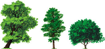 Willow, alder and walnut trees. Vector royalty free illustration