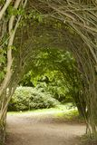 Willow arch Royalty Free Stock Photography