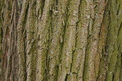 Willow background Stock Photography