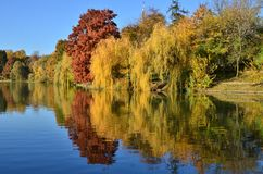 Willow and bald cypress trees reflected in water