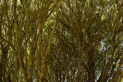 Willow. On the bank of the lake royalty free stock images