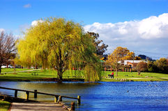Willow and Boat ramp. Willow tree and boat ramp at Henley Lake,Masterton, New Zealand Stock Image