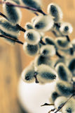 Willow branch with catkins in white vase Royalty Free Stock Photo