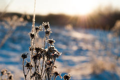 Willow branch in the cold Stock Image
