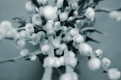 Willow branch with fluffy buds in a vase, top view, macro, blurred background in black and white stock images