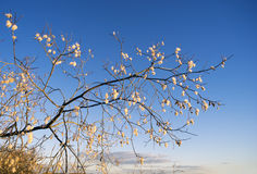 Willow branch with a furry catkins against the blue sky. Stock Photos
