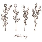 Willow branch hand drawn vintage ink sketch vector Botanical illustration. Health and nature collection of medical. Vector illustration of sketched pussy willow Royalty Free Stock Images