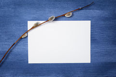 Willow branch on paper card Stock Image