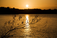 Willow branch in sunset Stock Photo