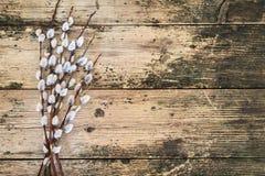 Willow Branches Immagine Stock Libera da Diritti