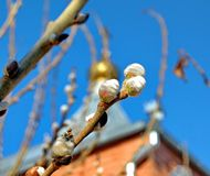 Willow branches against a background of blue sky and golden domes of the church. Orthodox Easter holiday. Happy Day Bright Easter!. Closeup. Palm Sunday. Spring stock images