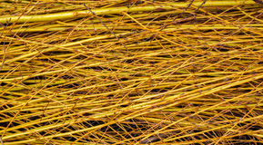 Willow branches background Royalty Free Stock Photography