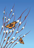 Willow branches and butterflies Stock Photo
