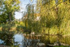 Willow branches reflecting on water Royalty Free Stock Photography