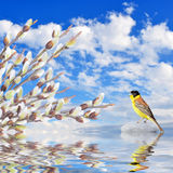 Willow branches and singing bird reflected in the water Royalty Free Stock Photo