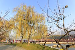 Willow and bridge in datang furong garden in winter, adobe rgb Royalty Free Stock Image