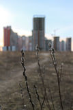 Willow bud on the cityscape Stock Photography