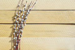 Willow bunch on natural wooden table. Willow bunch over wooden table background with copy space for text. Top view Stock Image