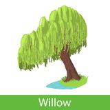 Willow cartoon tree Stock Images