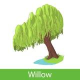 Willow cartoon tree Stock Images