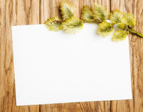 Willow catkin on wooden table and white paper blank Stock Photos