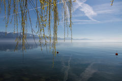 Willow drapes Lakes Geneva. Calm and peaceful Lake Geneva sits in the background of a weeping willow tree Royalty Free Stock Photography