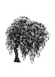 Willow. Drawing tree on white background. Royalty Free Stock Photo