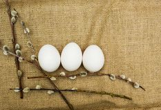 Willow and eggs, easter background royalty free stock image