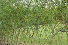 Willow fence in the garden stock photos