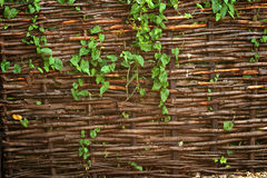 Willow fencing screen royalty free stock photo