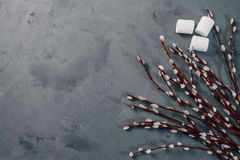 Willow flowers  on dark background. Candy,  minimal concept, food background. Stock Images