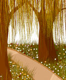 Willow forest background. Willow forest and alley. Romantic background Royalty Free Stock Photo