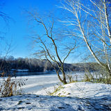 Willow on the frozen river. On sunny winter day, February, Russia royalty free stock images