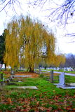 Willow in graveyard. Autumn graveyard park with yellow willow at rainy gloomy november day.Varna city.Bulgaria,resting place,evanescence human life concept Stock Photography