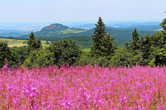 Willow-herb bloom in Rhön landscape Royalty Free Stock Images