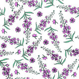 Willow herb, Chamerion angustifolium, fireweed, rosebay hand drawn color sketch botanical illustration, seamless vector. Pattern graphic flower texture Royalty Free Stock Photography