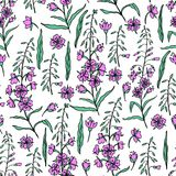 Willow herb, Chamerion angustifolium, fireweed, rosebay hand drawn color sketch botanical illustration, seamless vector. Pattern graphic flower texture Stock Photo