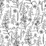 Willow herb, Chamerion angustifolium, fireweed, rosebay hand drawn ink sketch botanical illustration, seamless vector. Pattern graphic flowers texture Stock Image
