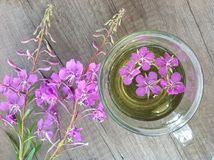 Willow herb Ivan tea in cup at the wood table workplace. As background stock images